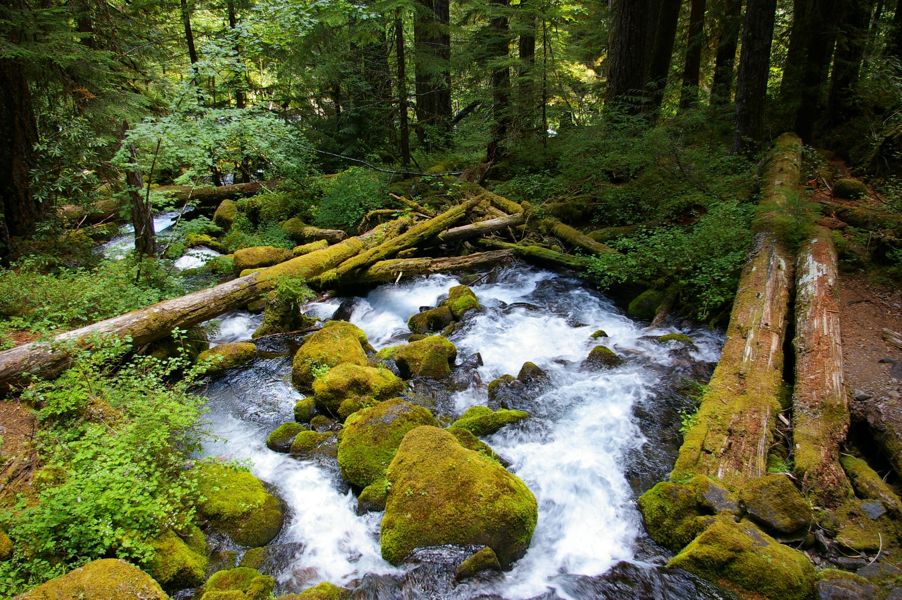 Mount Jefferson Wilderness 9