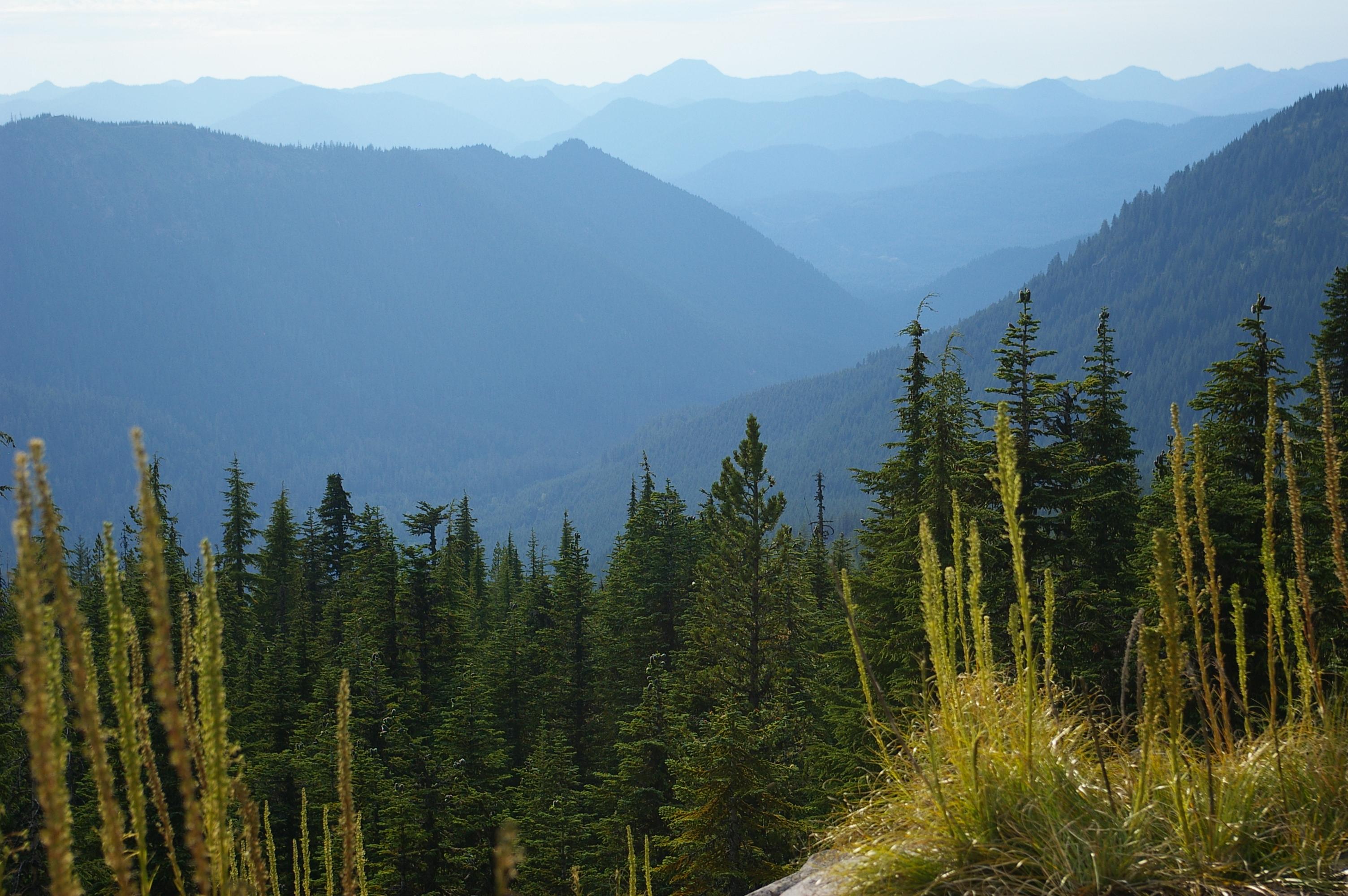 Mount Jefferson Wilderness 8